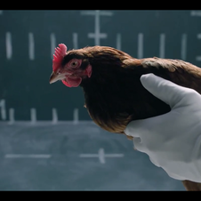 Mercedes' ad illustrated its Magic Body Control system with chickens